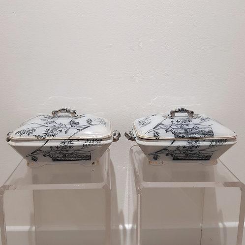 Legumiere gemelle dell'800 Galleria Papier