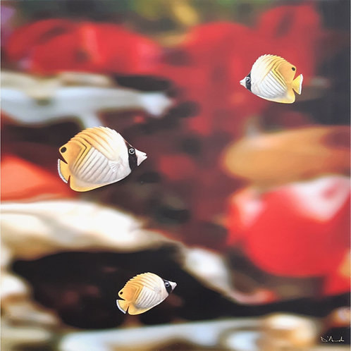 Catello D'Amato - Acquario 04 - Exclusive Galleria Papier