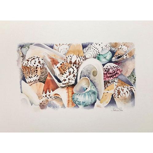 Federica Peco - Composizione con conchiglie - acquerello su carta preparata  - Exclusive Galleria d'arte Papier