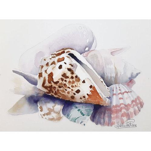 Federica Peco - Composizione con conchiglia - acquerello su carta preparata  - Exclusive Galleria d'arte Papier