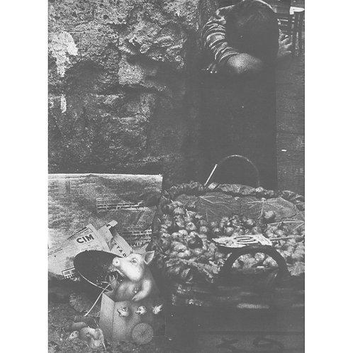 Alfonso Marino - Intrusione 59: Peterse e Del Bue Dalia - Exclusive Galleria Papier
