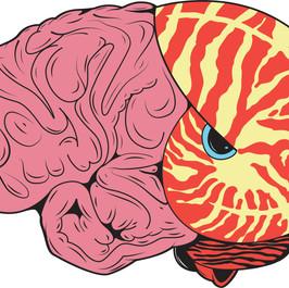 Brain Shell