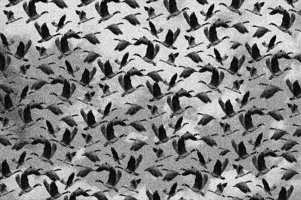 a Bird Freedom