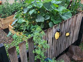 Do you Veggie Garden?