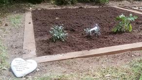 Charity Herb Garden