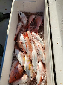 Red Snapper South Padre Island, TX