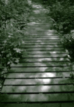 Dappled sunlight on boardwalk path for  Counselling Essex