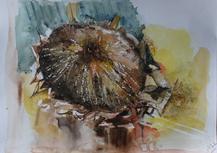 sunflowerwatercolour240321.png