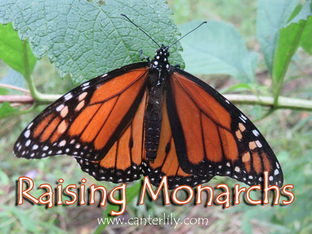 Saving the Monarch's