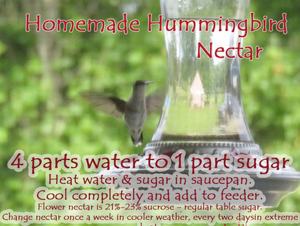 Homemade Hummingbird Nectar