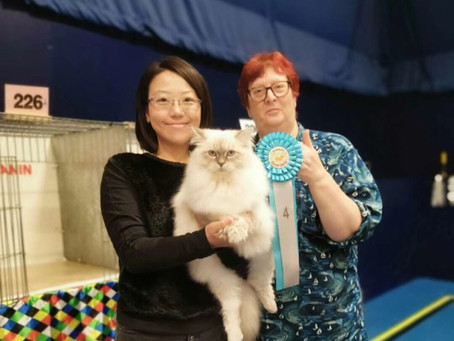 King of our cattery