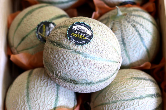 Melon | Maroc | 1 pièce