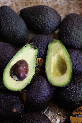 Avocat Gros | Pérou | 1 pièce