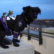 Black dog wearing a jersey