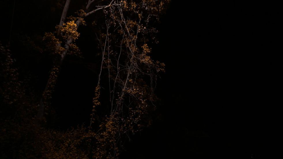Beverly_Night.jpg