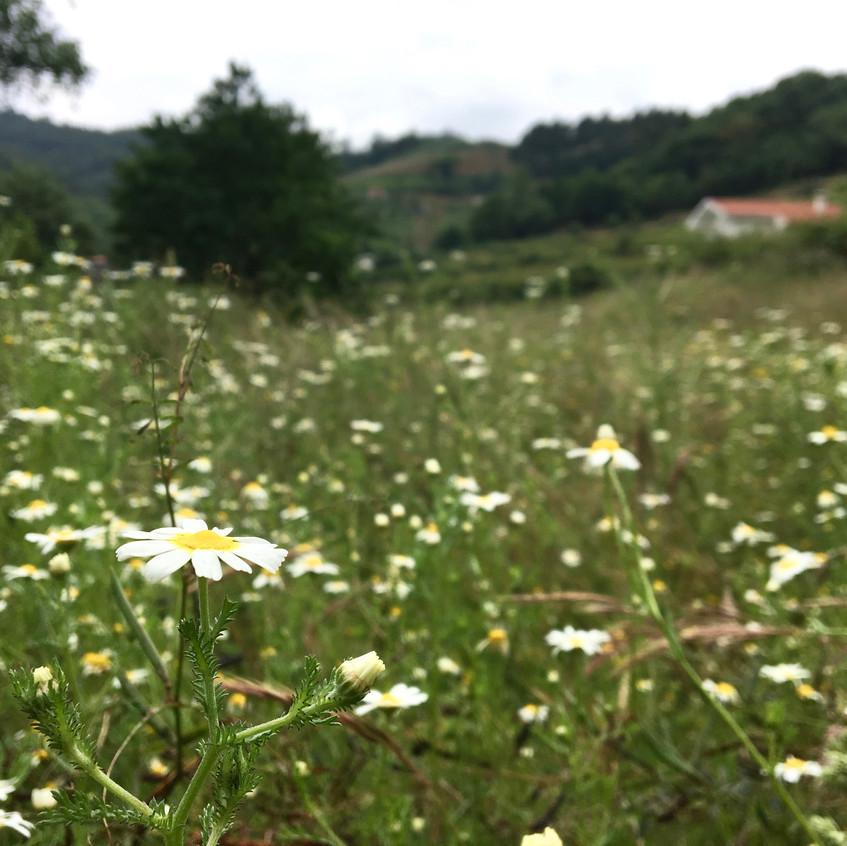 Rio Moments, Castelo de Paiva, Portugal, Randomly Blogging Around