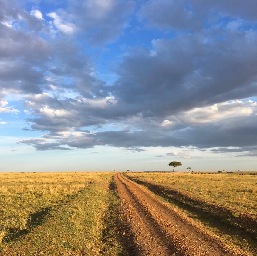 Wild life in the African Savannah, Massai Mara, Kenya, Randomly Blogging Around