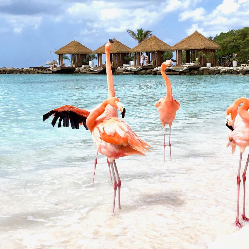 Aruba, Randomly Blogging Around
