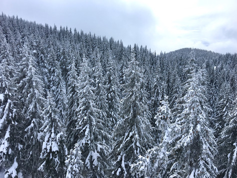 Pamporovo - the Bulgarian ski resort you will most likely will fall in love with