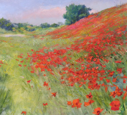 Poppies Blossoming