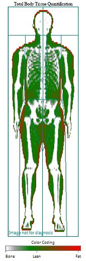 body composition readout