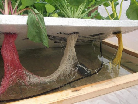 Things to consider when running experiments in hydroponics