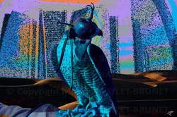 Chaperoned falcon