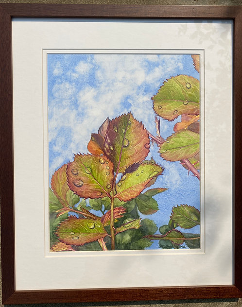 """Rain drops on Rose Leaves"" by Elaine Goldstone"