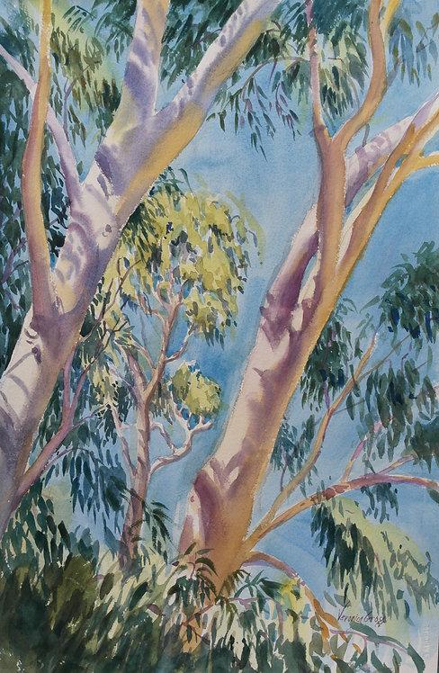 """Vasona Eucalyptus"" by Veronica Gross"