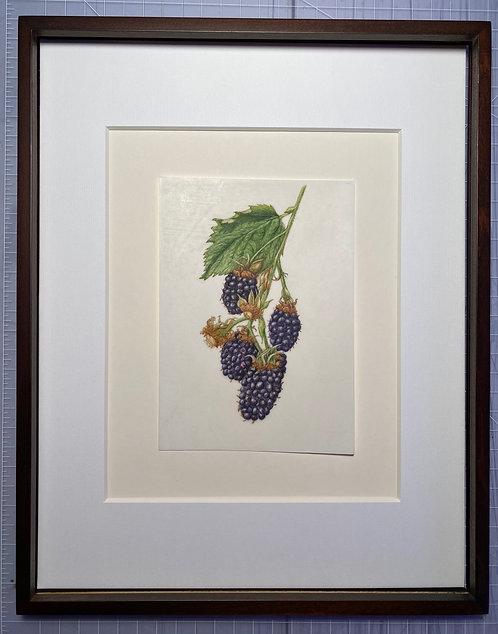 """""""Blackberries"""" by Elaine Goldstone"""