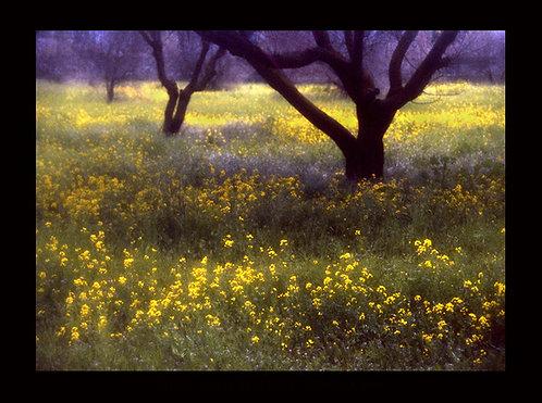 """""""Clara's Ranch #30"""" by Craig Scoffone"""
