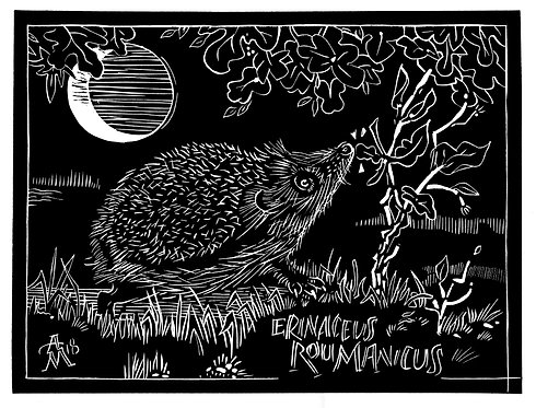 """Hedgehog and Moon"" by Ann Miller"