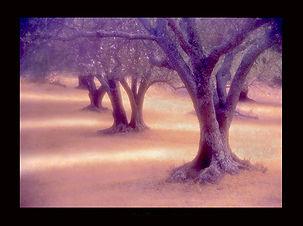 """Pleasanton Ridge #51"" by Craig Scoffone"