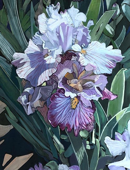 """""""Ben Lomond Irises"""" by Linda Curtis"""
