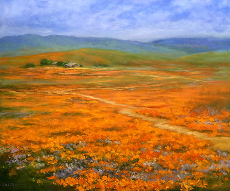 """California Poppy Blooms"" by Lin C Peng"