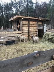 goat barn2.jpg