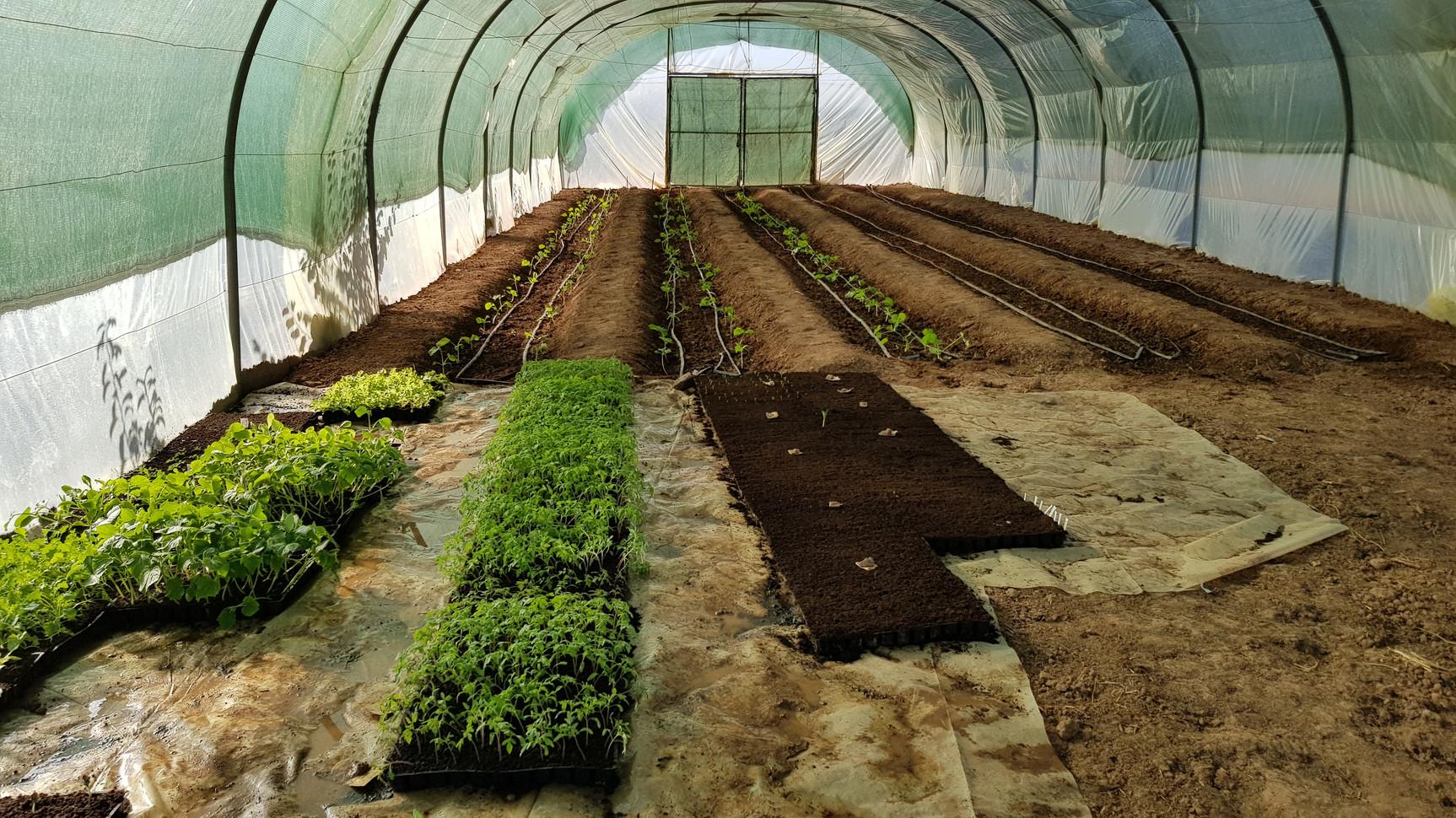 Préparation des semis!....