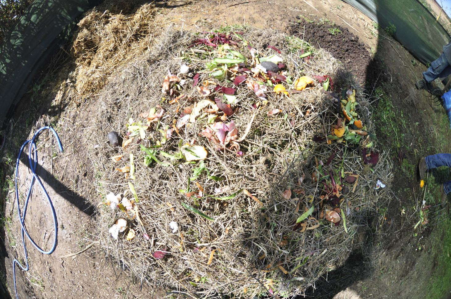 Préparation du compost compost inoculum pour thé de compost