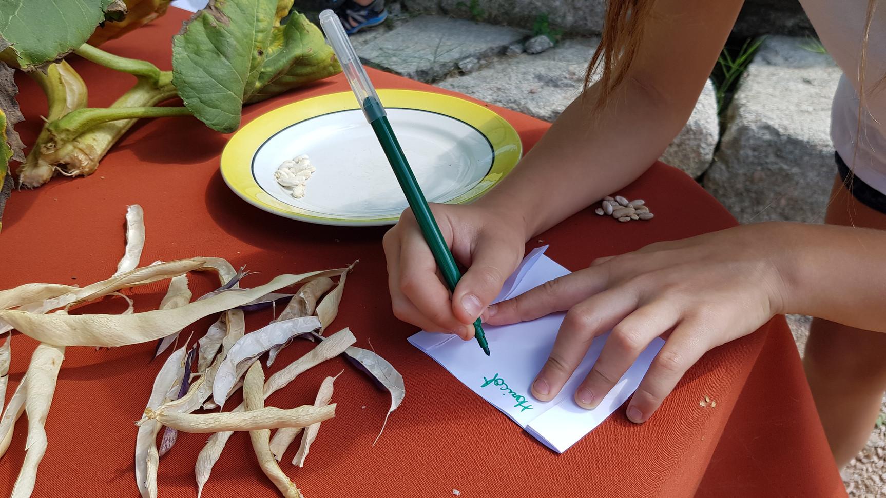 Ecrires les le noms des semences avec la dates, la variétés et l'année de récolte...