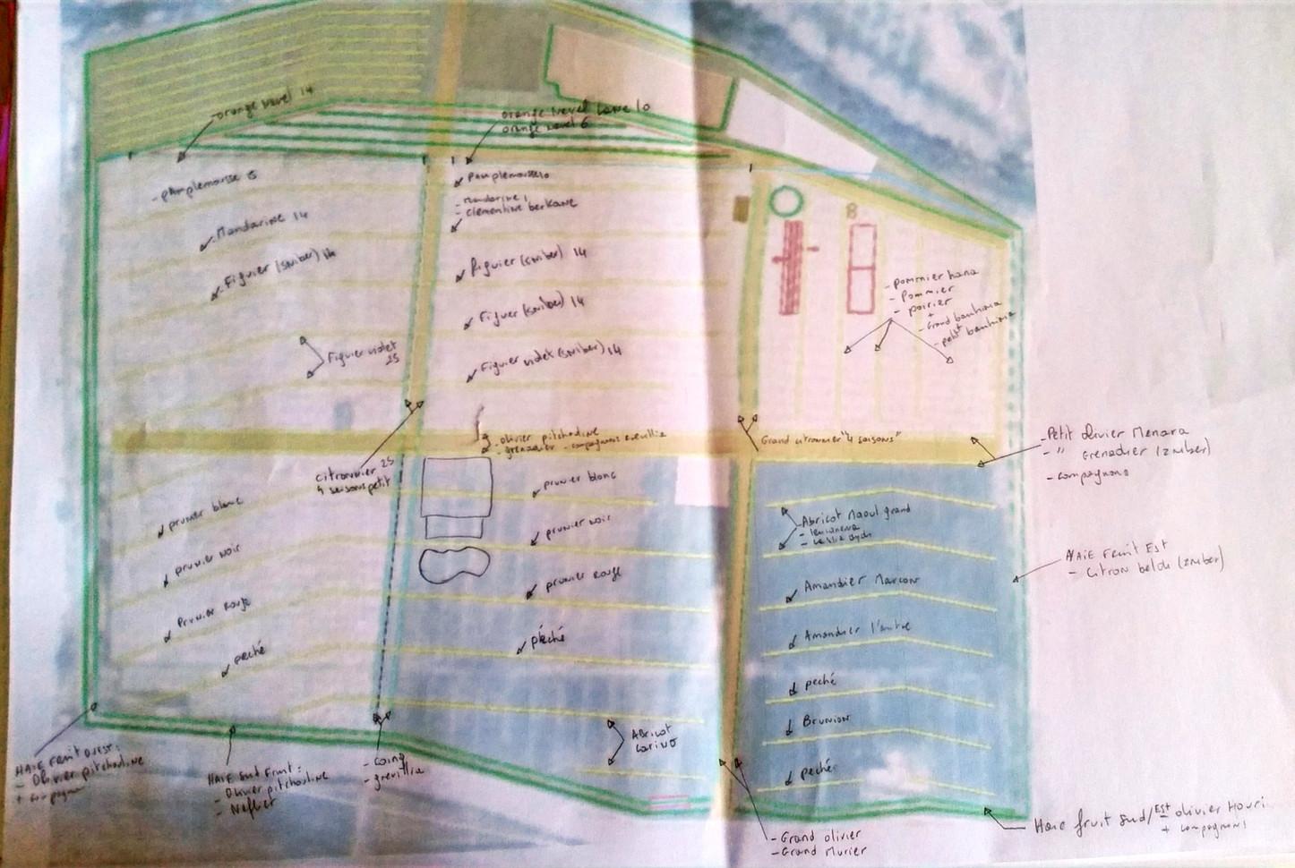 Design, planche implantation des fruitiers...