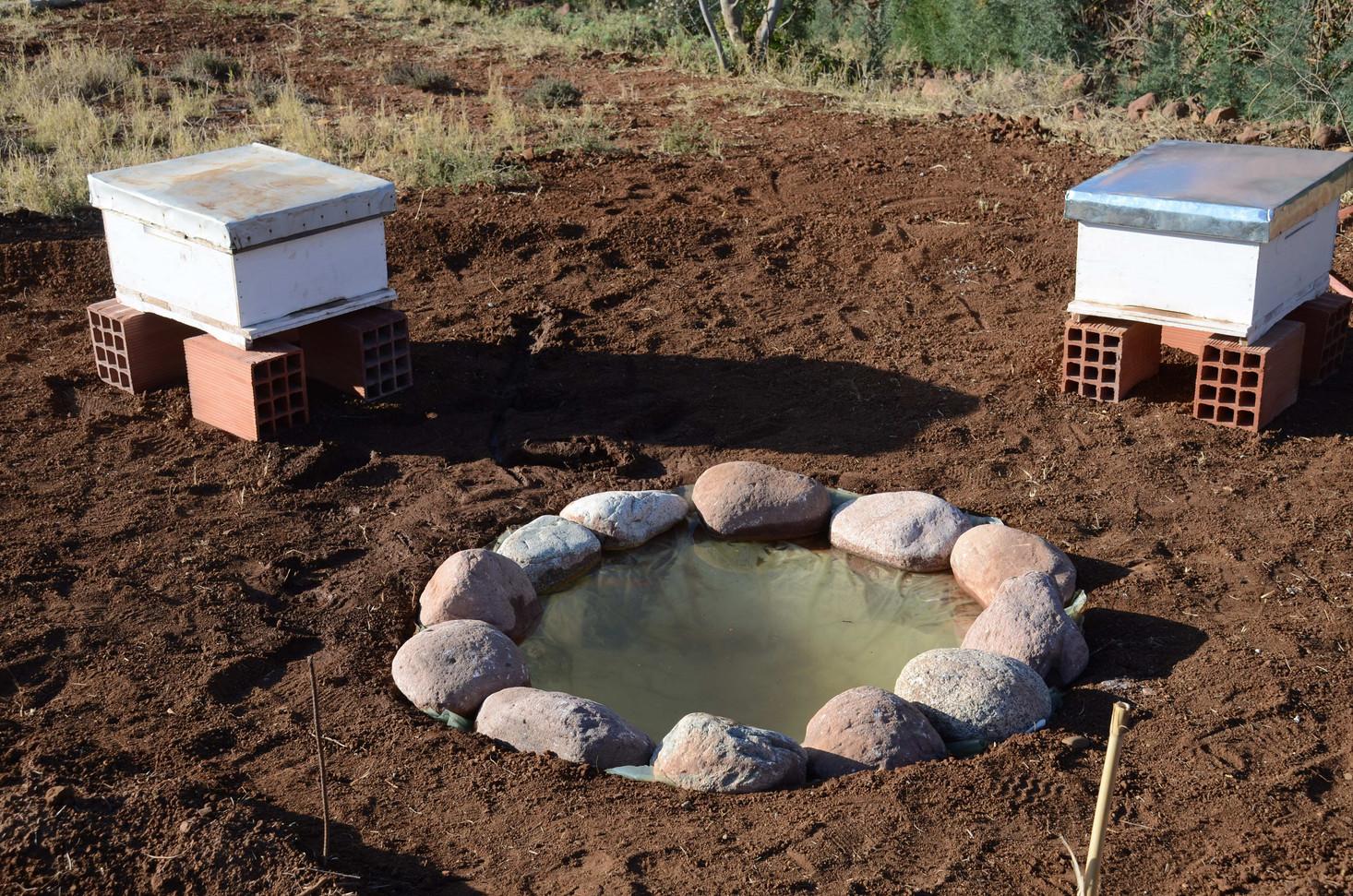 Bassin pour les abeilles...