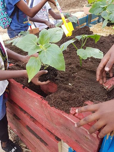 Permaculture urbaine Ecole permaculture, regeneration vegetale, formation pour les enseignants aux E3D EDD, transition écologique, écocitoyenneté