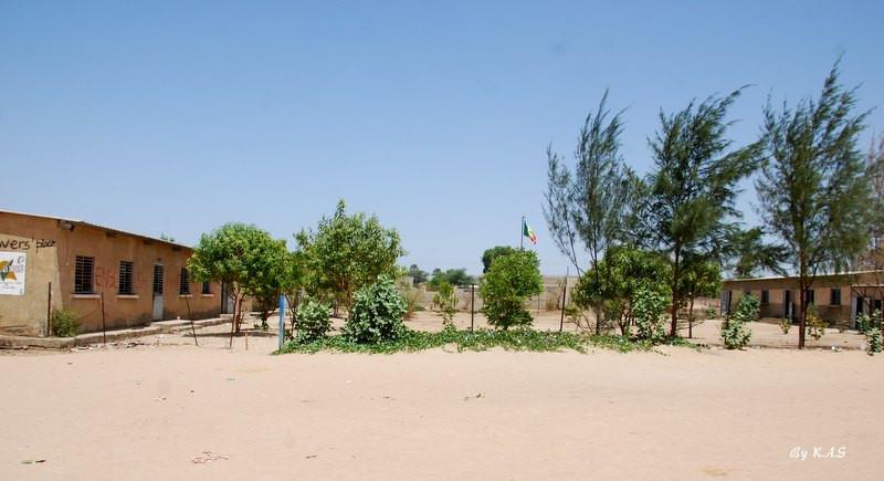 Cours d'école planté en 2008....(Photos de 2016)