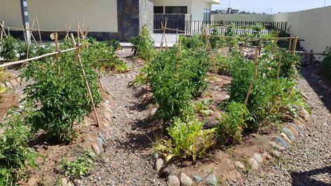 New garden montessori (12).jpg
