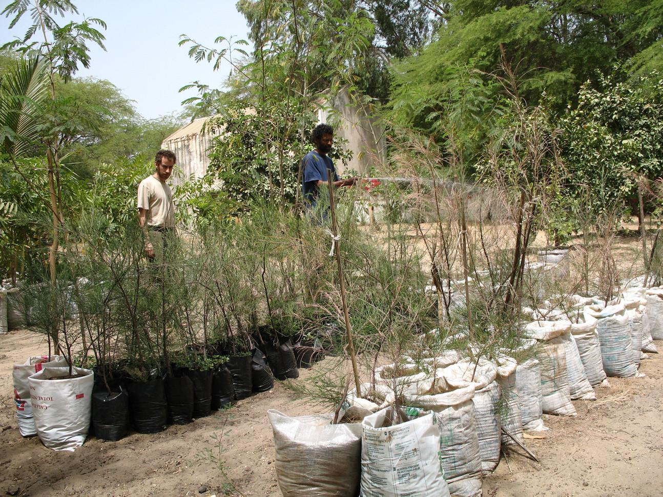 Pépinière d'arbres fruitiers et résistant aux zones arides...