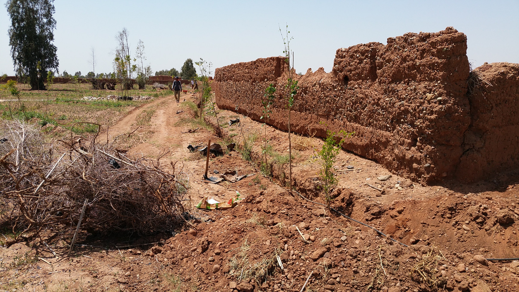 Plantation de la haie...