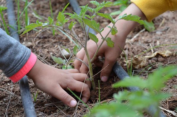 education permaculture, labellisation E3D programe EDD, jardin école, réalisation de jardin dans une école