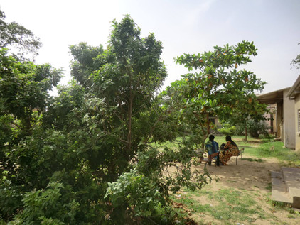Plantation année 7, même endroit!...(Kaolak)