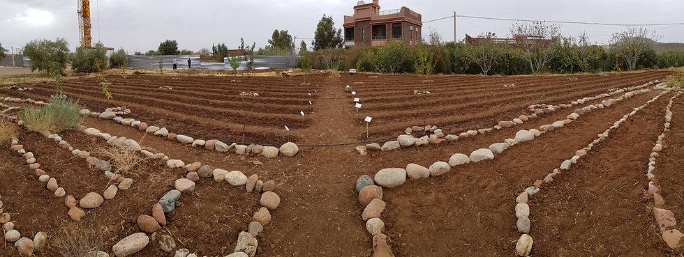 formation pour les enseignants aux E3D EDD, transition écologique, écocitoyenneté , Education permaculture dans les écoles, autonomie alimentaire, regeneration des sols, jardin en plein désert, fabien tournan, regeneration des sols, regeneration vegetale, autonomie alimentaire, jardin partagés,