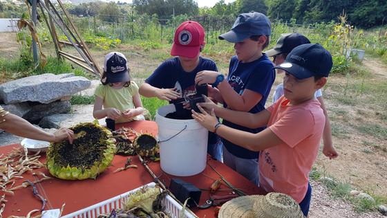 Test de germination...